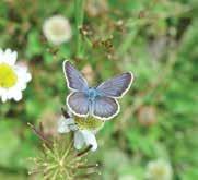 kelebek-gozlemciligi-2